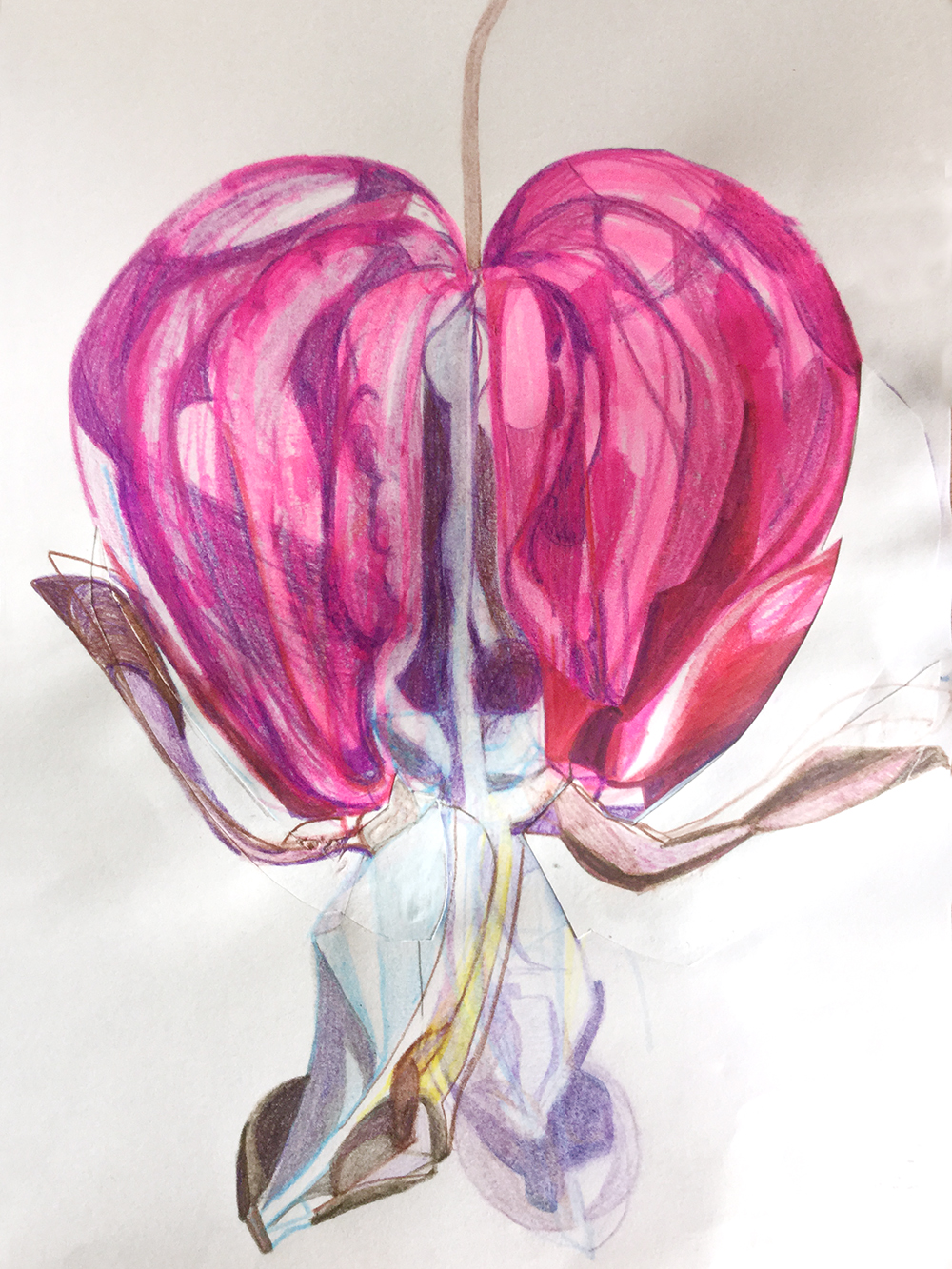 Bleeding Heart (Brockwell Park) study
