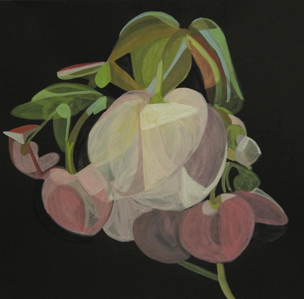 House Plant_Begonia study_wp