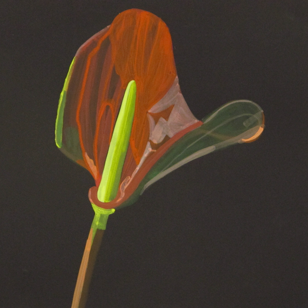 House Plant_Flamingo Flower (study)_wp