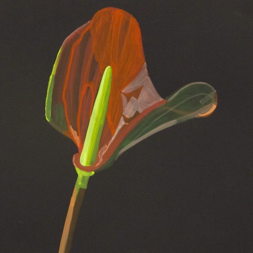 House Plant_Flamingo Flower (study)_wp