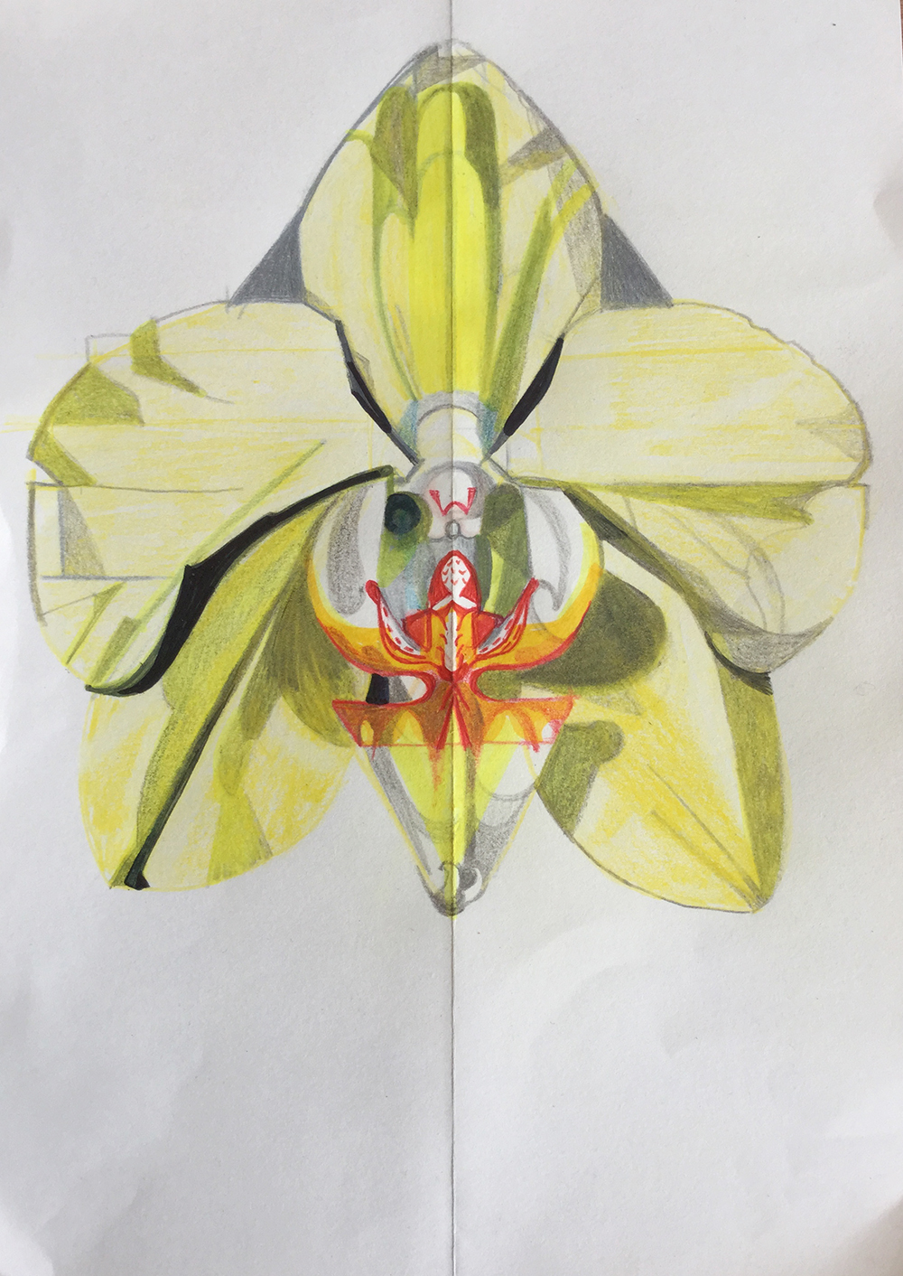 Yellow Orchid study